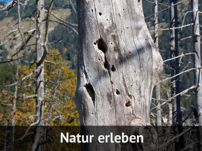Natur erleben