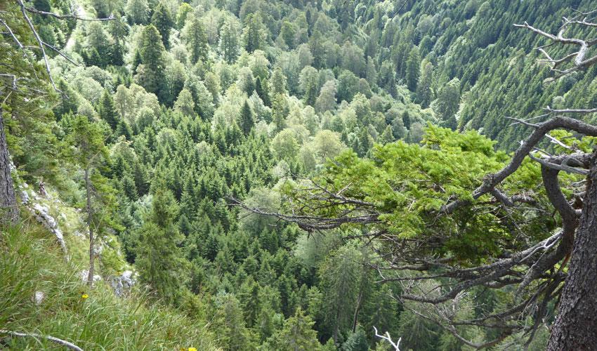 bergmischwald-am-sulzeck